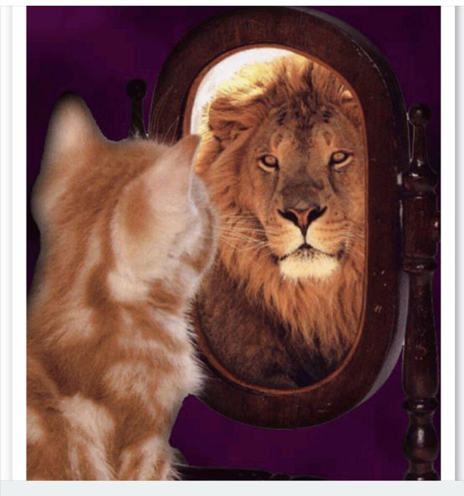 chaton qui se regarde dans un miroir et qui devient un lion